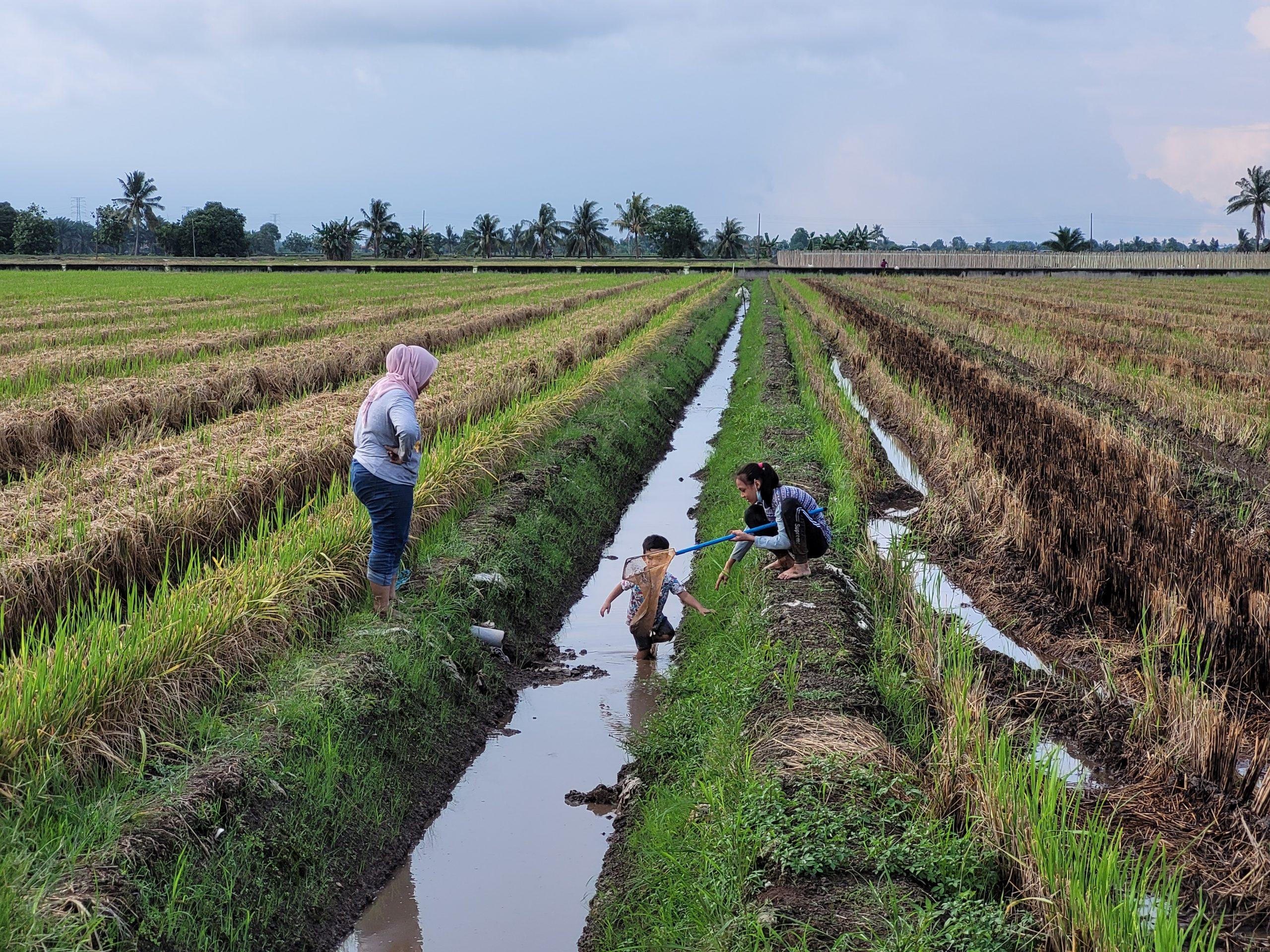 Homestay di Tanjung Karang